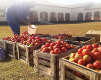 Oblates farm in Zambia